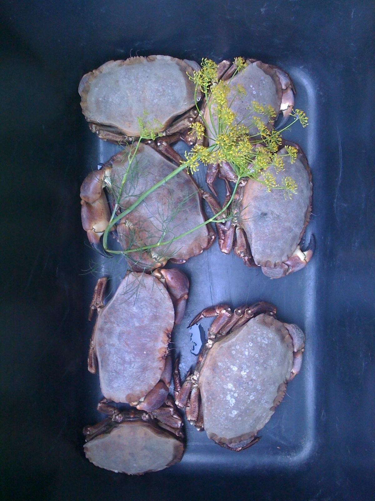 Koka krabba eller kräftor