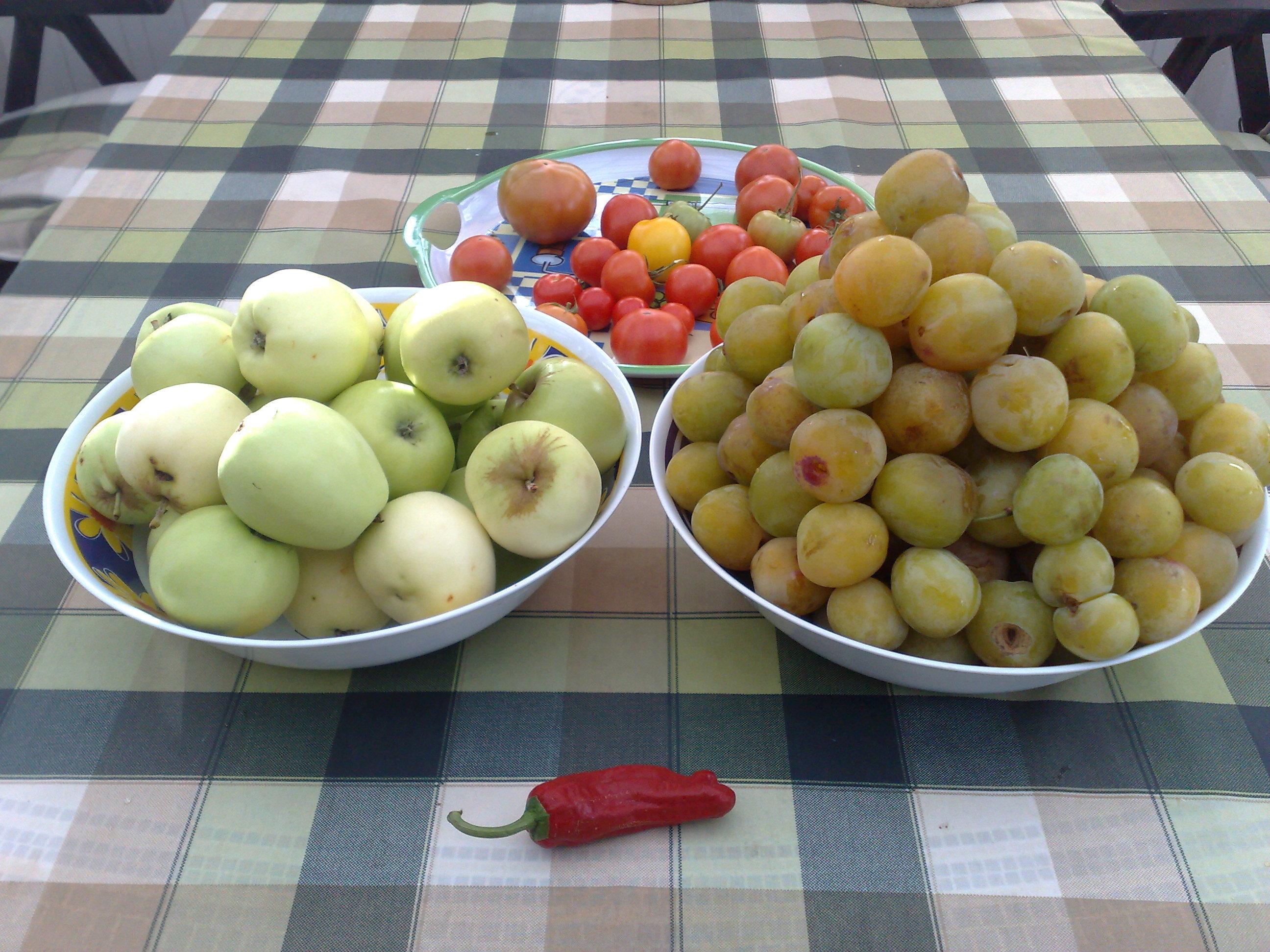 Plommon- och äp