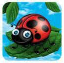 Ladybird_70