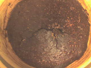 rosta nötter i ugn lchf