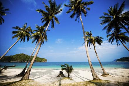Coconut Palms, Thailand Fototapeter & Tapeter 100 x 100 cm