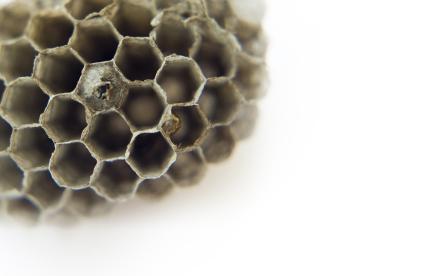 Wasp Nest Fototapeter & Tapeter 100 x 100 cm