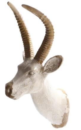 Väggdekoration antilop horn
