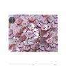 Knappar rosa blommor blomma pärlemor söt fin vackert pink sy hobby äkta