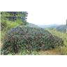 3m x 2m kamouflage netto nettning Camping militär jakt