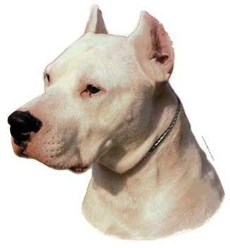 Hunddekal - Dogo Argentino (huvud)