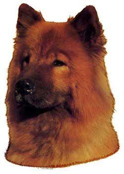 Hunddekal - Eurasier (huvud)