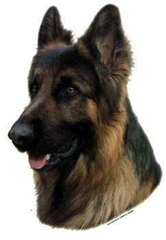 Hunddekal - Schäfer långhårig (huvud)