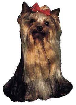 Hunddekal - Yorkshireterrier (huvud)