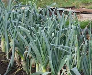 Using and cooking Winter Vegetables - Leeks 1