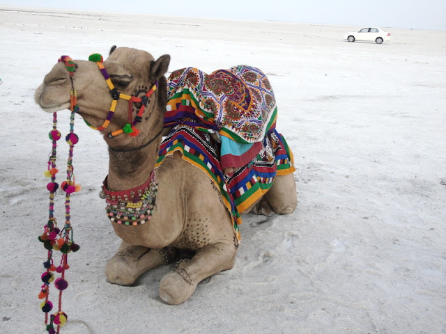 Kutch , The Street Food and The Rann Utsav