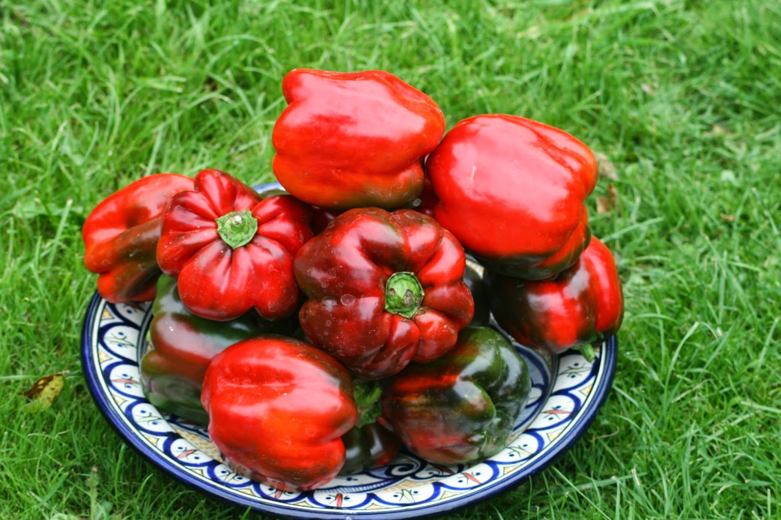 Sweet Peppers - dealing with a glut of sweet red peppers