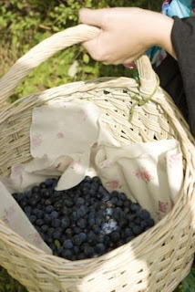 Making Sloe and Hedgerow Gin
