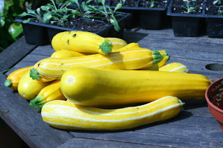 Curcurbits - pumpkins, squashes and courgettes and autumn vegetables