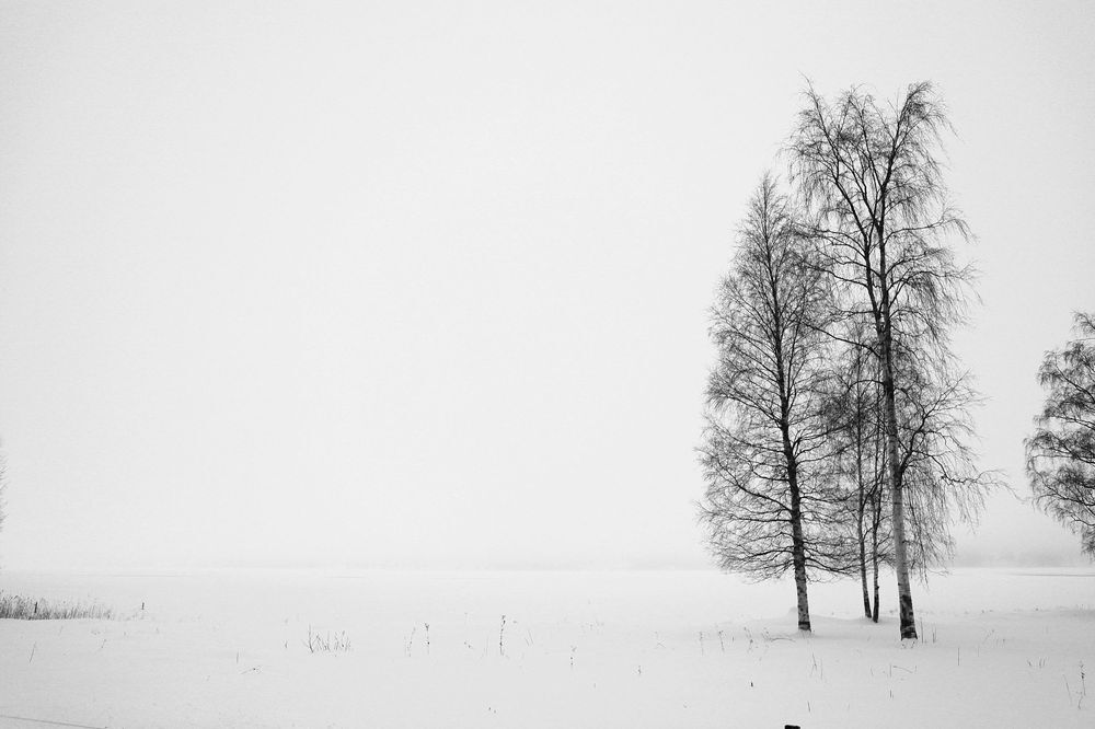 En väldigt vit julvecka  - A very white holiday