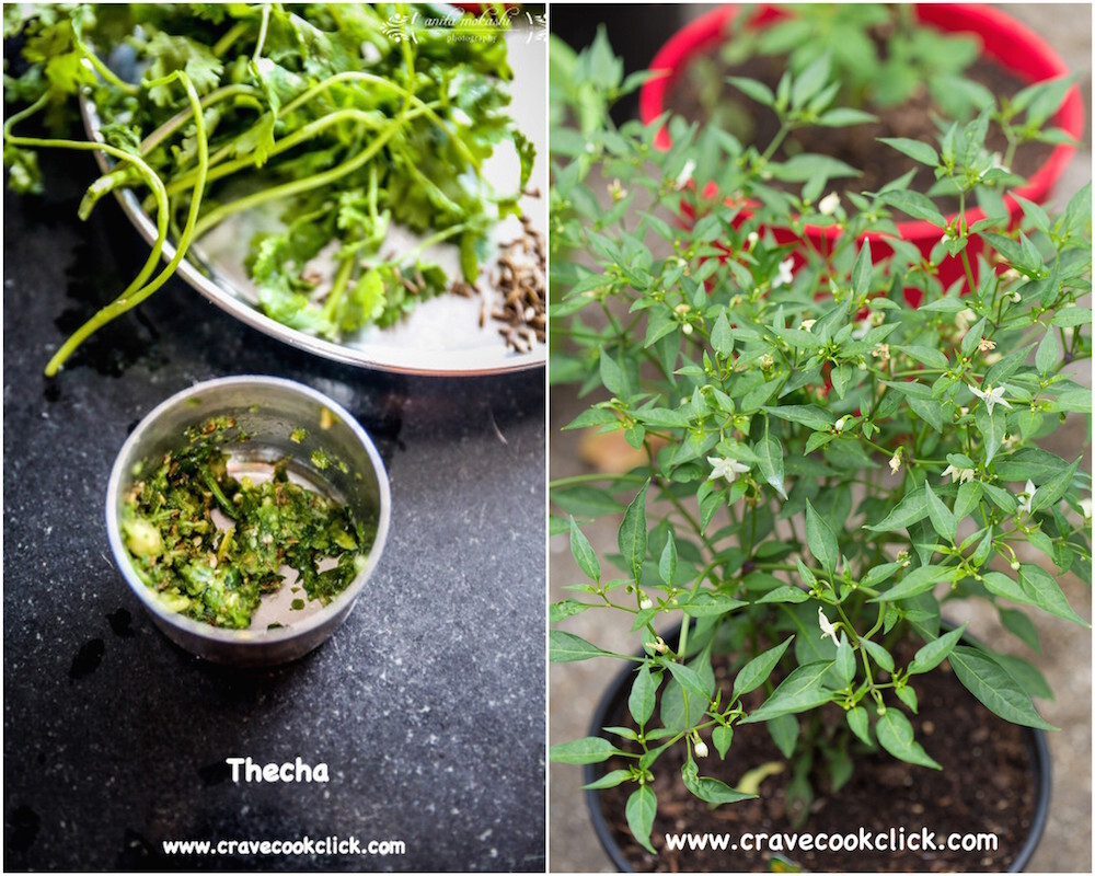 The rise of green chillies and Thecha Recipe