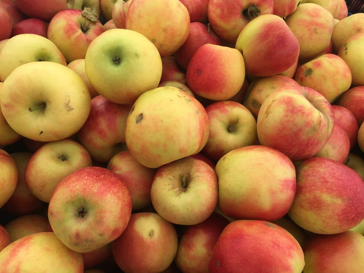 Why It's So Difficult To Bite Into A Tasty New York Apple Right Now