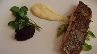 Seared jewfish with a parsnip cream, saute'ed snow peas and a beetroot and Quandong compote.