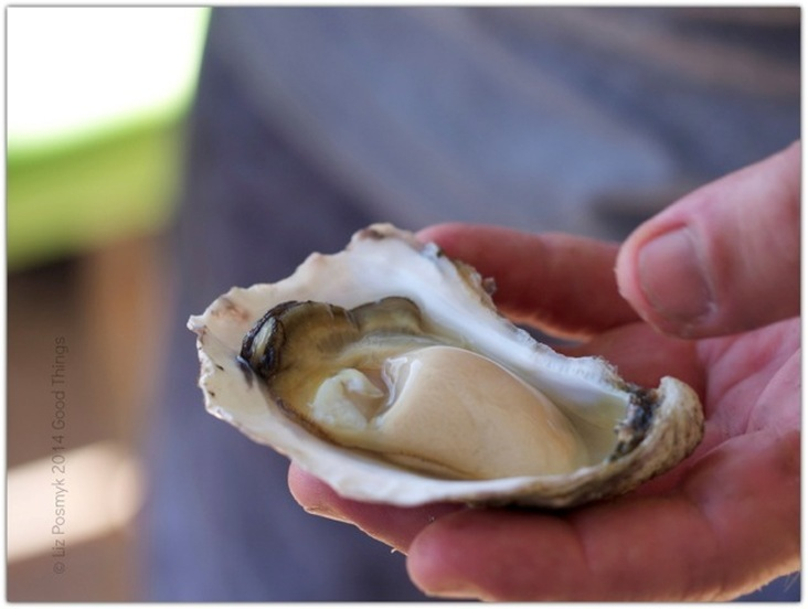 On oysters, a visit to Wapengo Rocks certified organic oysters and some retro recipes