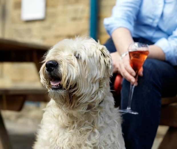 The UK's best dog-friendly hotels including one where you can borrow the hotel dog for walkies!