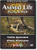 Animal Life - Young & Wild Vol. 4