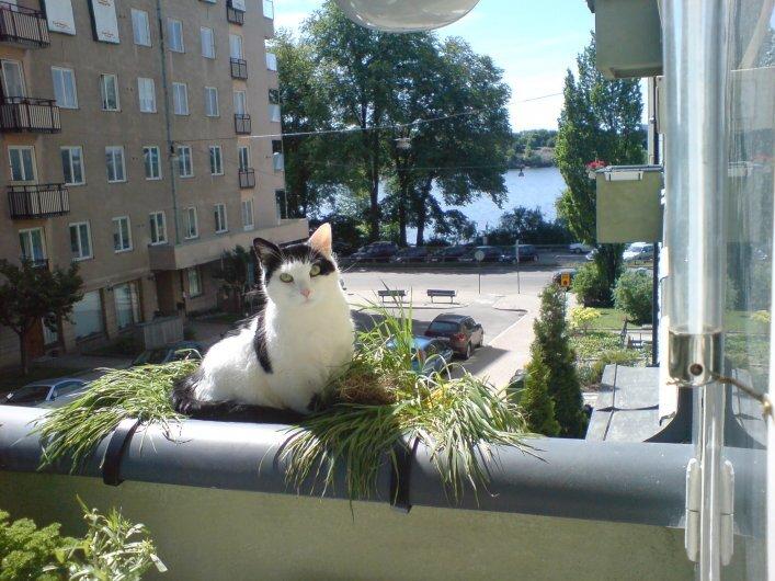 Fin lägenhet vid Norr Mälarstrand på Kungsholmen, Stockholm uthyres
