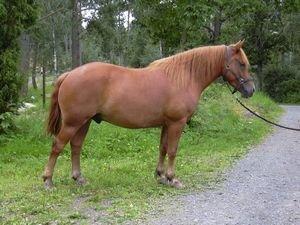 Hyr en häst - JACOB KRUT