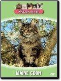 Våra katter - Maine Coon