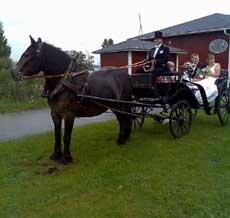 Häst och vagn till Bröllopet etc
