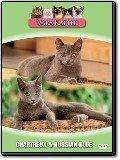 Våra katter - Chartreux och Russian Blue