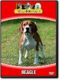 Våra hundar - Beagle