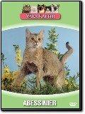 Våra katter - Abessinier