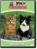Våra katter - Huskatten