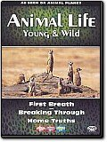 Animal Life - Young & Wild Vol. 1