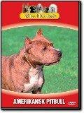 Våra hundar - Amerikansk pitbull