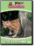Våra katter - Ocicat och Egyptian Mau
