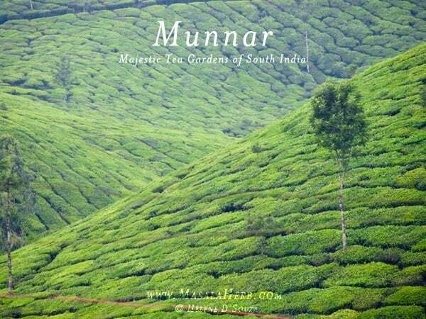 Munnar Hill Station Kerala – Majestic Tea Gardens of South India