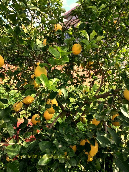 Juicy and perfumed lemon and oranges from southern Italy