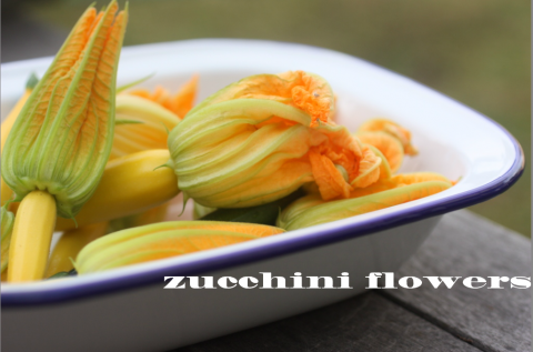 Ricotta stuffed Zucchini Flowers with tomato sauce