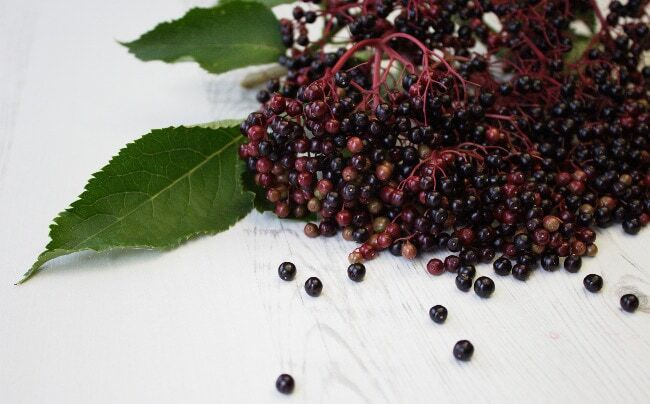 Harvesting Elderberries: Picking, Preserving & Recipes