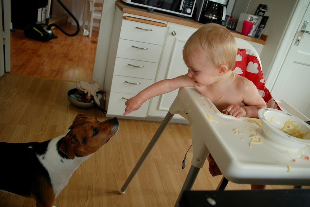 Hungry little doggy? Here, taste it!