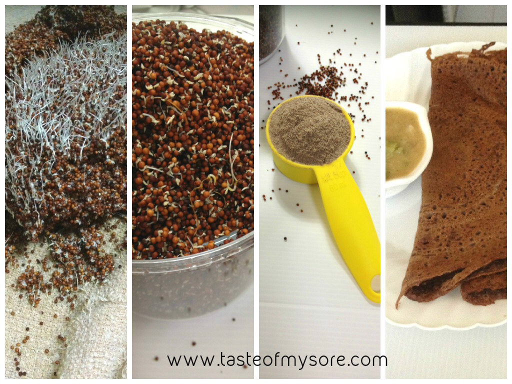 Sprouting Ragi & Sprouted Ragi Flour