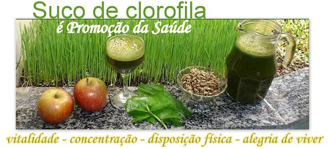 Suco de Clorofila: o sangue das plantas