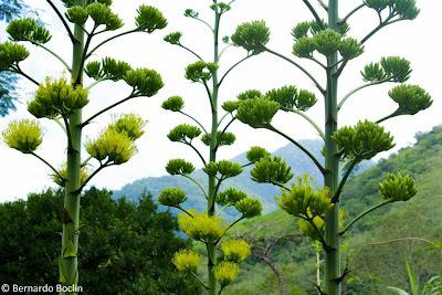 Maravilhoso Mundo das Flores Comestíveis