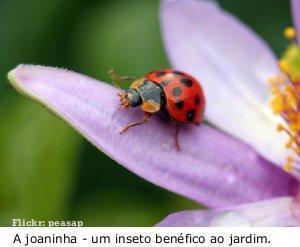 Insetos beneficos para horta organica