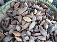 Nut of the Week - Pili Nuts