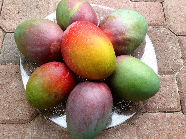 Elowrites!!! Falando sobre Frutas de Meu Quintal - About Fruits From My Backyard