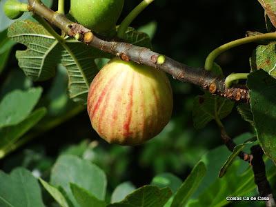 Geléia de figo
