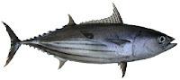 peixe bonito