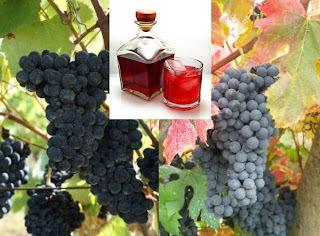 Suco de uva é mais nutritivo e benéfico do que o vinho